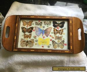 REAL BUTTERFLY TRAY GLASS TOP WOOD INLAY ART RARE SPECIMENS ART DECO STUNNING for Sale