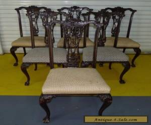 Antique Vintage Set 6 Heavily Carved Shell Chippendale Style Dining Chairs  for Sale