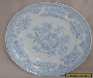 Burgess & Leigh Antique ASIATIC PHEASANTS Dinner Plate 24.2cm for Sale